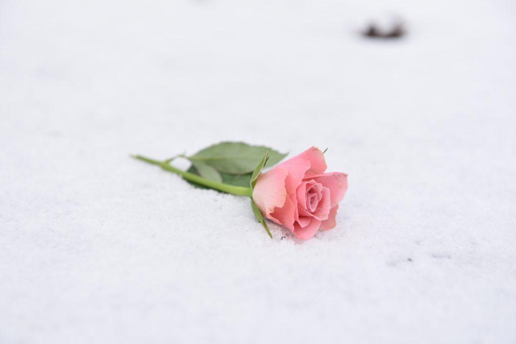 Workshop Fotografie Grundlagen Rose
